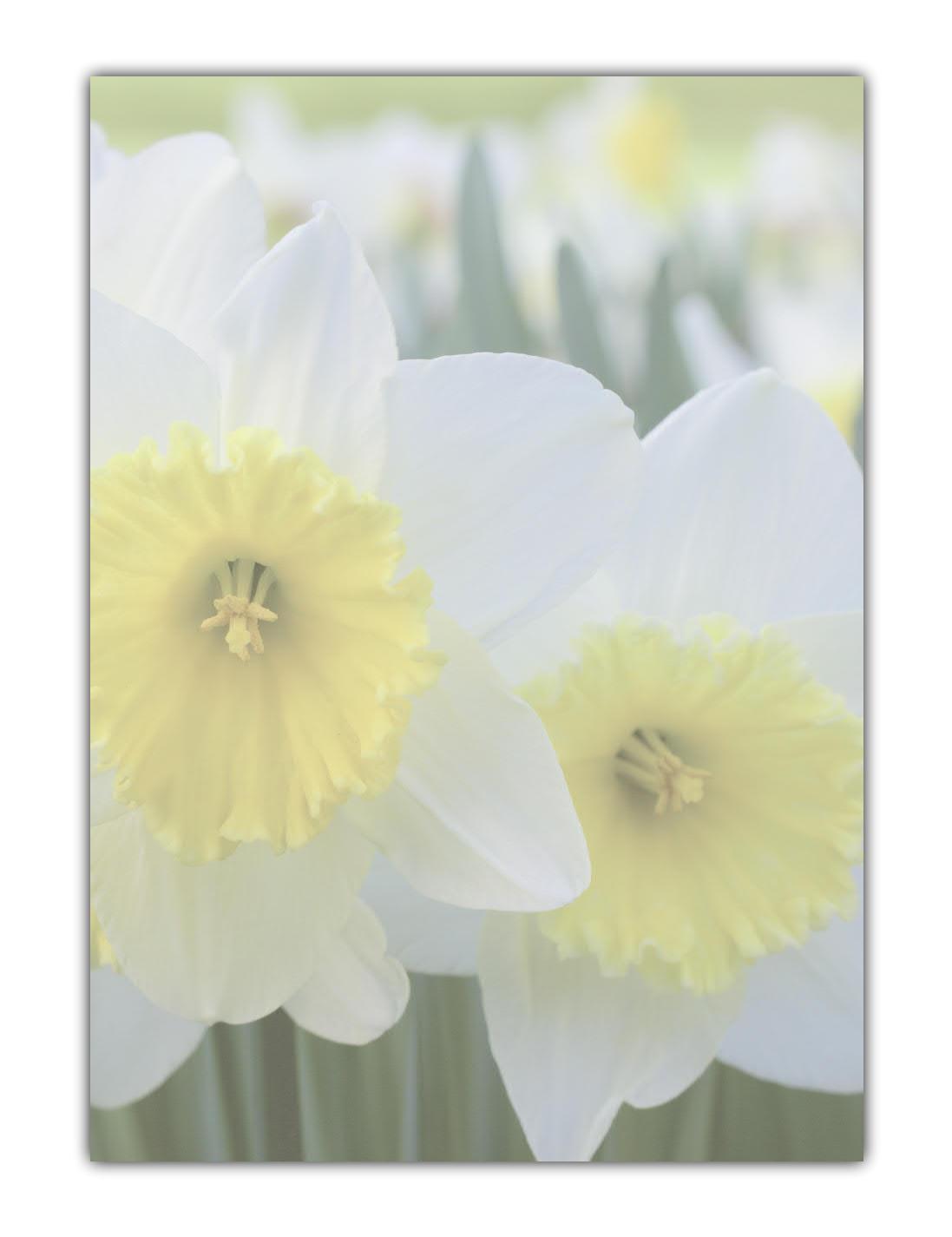 Blumen Ostern Motivpapier Briefpapier schöne weiß-gelbe Narzissen Osterglocken (MPA-5194, DIN A4, 100 Blatt)