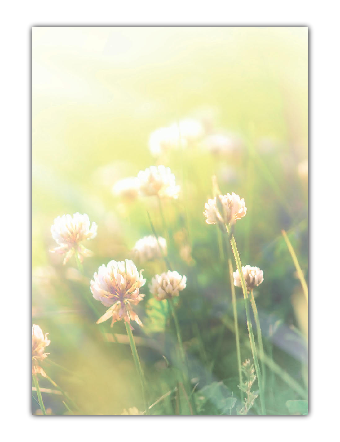 Motivpapier Briefpapier Sommerwiese mit Klee im Sonnenschein (MPA-5197, DIN A4, 100 Blatt)