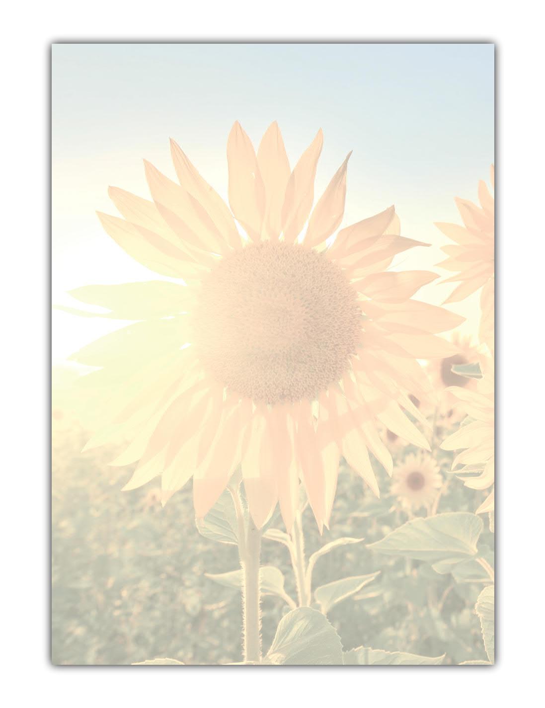 Motivpapier Briefpapier Sonnenblumen im Sonnenlicht (MPA-5199, DIN A4, 100 Blatt)
