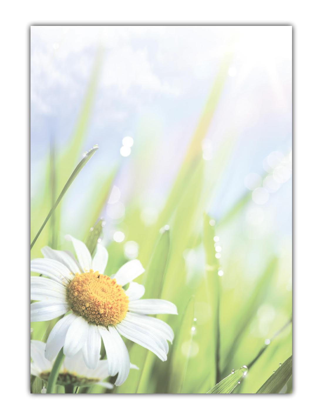 Blumen Motivpapier Briefpapier saftige Wiese mit Margeriten (MPA-5200, DIN A4, 100 Blatt)