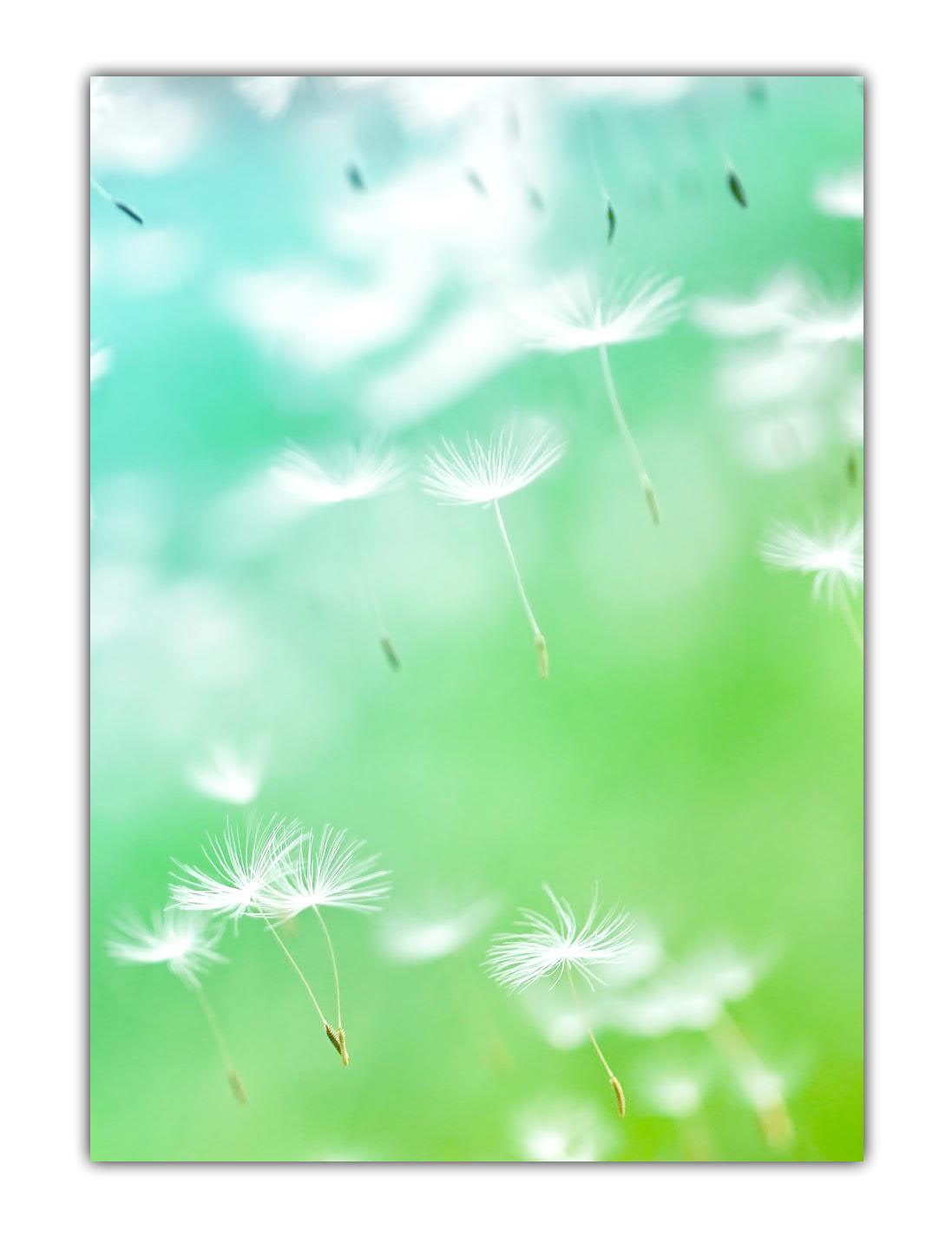 Blumen Motivpapier Briefpapier Pusteblumen im Wind (MPA-5201, DIN A4, 100 Blatt)